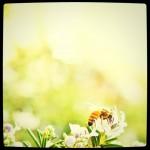 はたらき蜂 | by Shingo Irahara